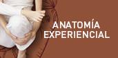 anatomia-exp